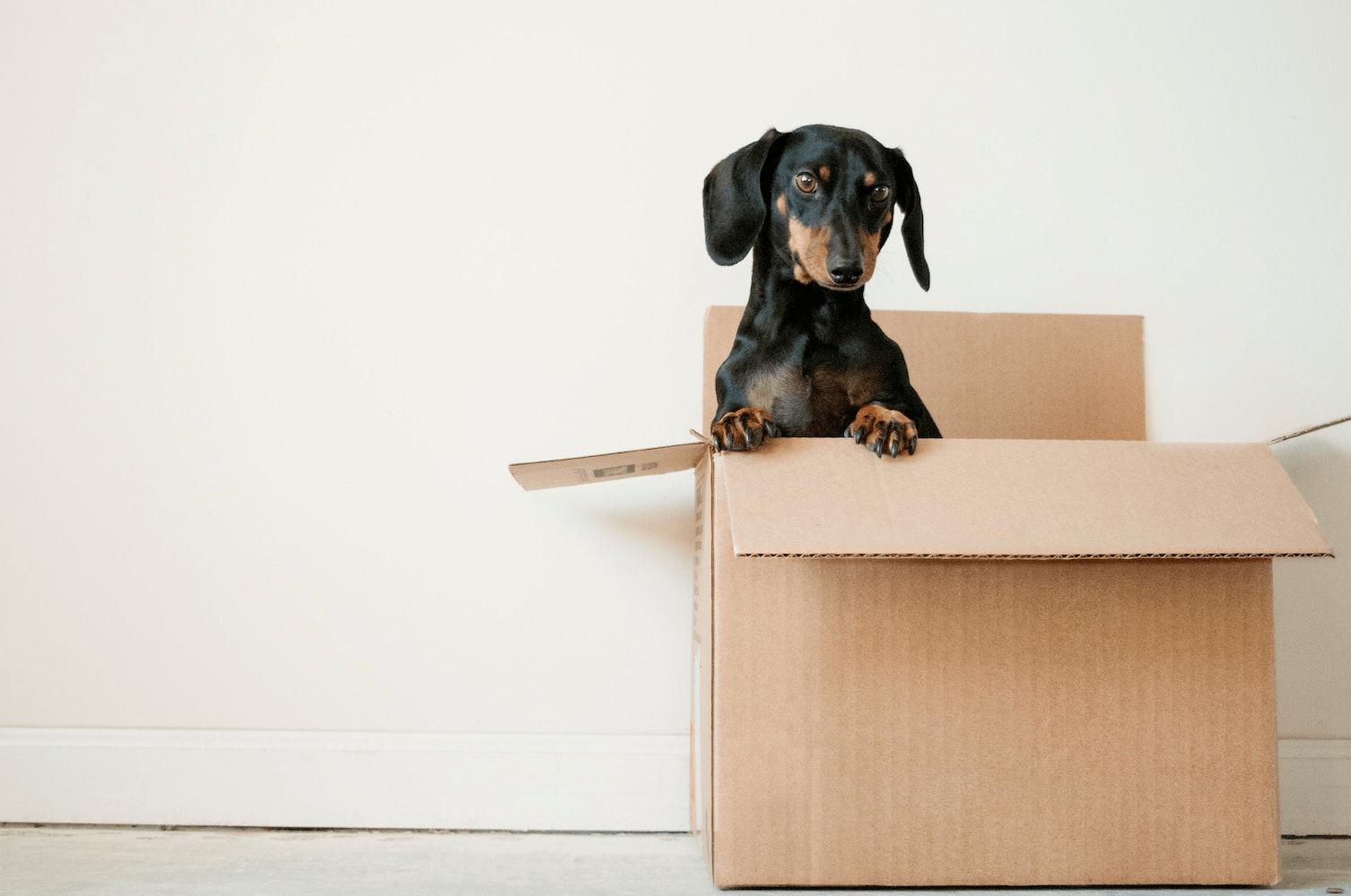 Sådan får du lettest og billigst flyttet dine ting